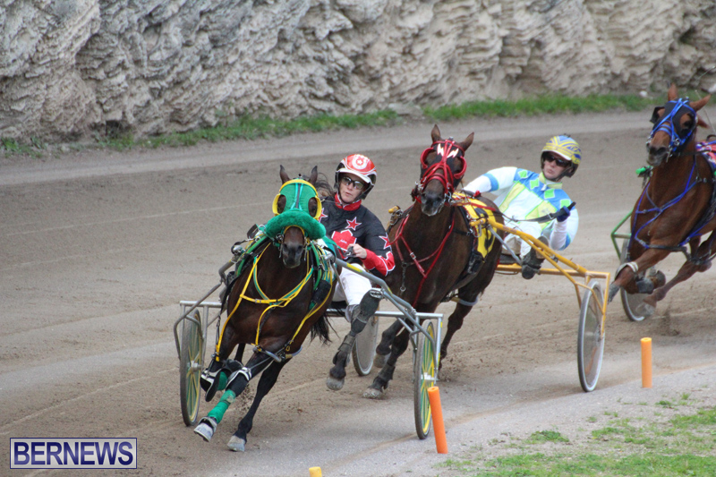 Harness-Pony-Final-Bermuda-Feb-18-2017-14