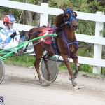 Harness Pony Final Bermuda Feb 18 2017 (9)